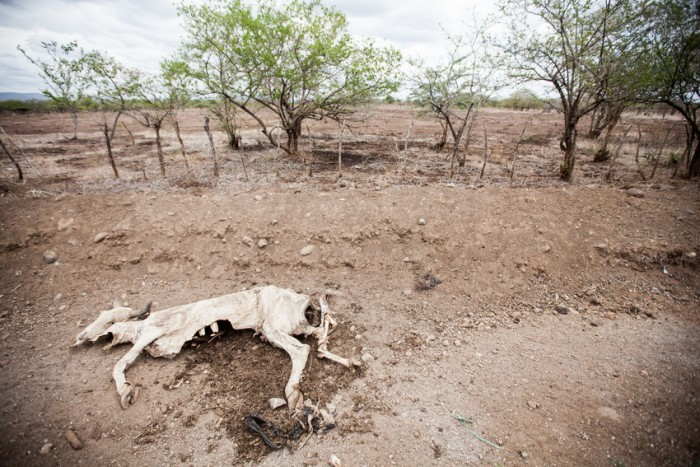 Drought is affecting large areas of Central America. Across Nicaragua hundreds of cattle are dying, wells are drying up and the harvests have failed. Here, near San Francisco Libre, ACT members with the population that is affected by the drought. The drought is believed to be a function of climate change.
