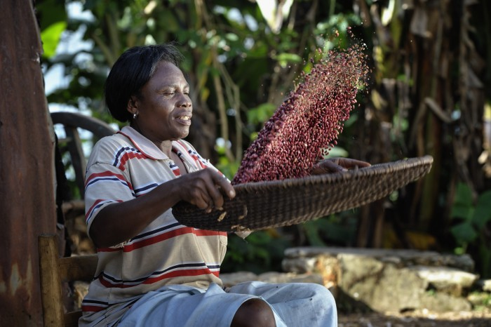 Cebonet Alcide winnows beans in Despagne, an isolated village in southern Haiti where the Lutheran World Federation has been working with residents to improve their quality of life. Photo: Paul Jeffrey