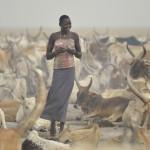 A Dinka woman walks among cattle in a village in South Sudan