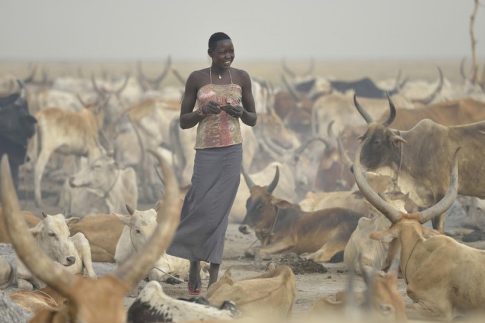 A Dinka woman walks among cattle in a village in South Sudan